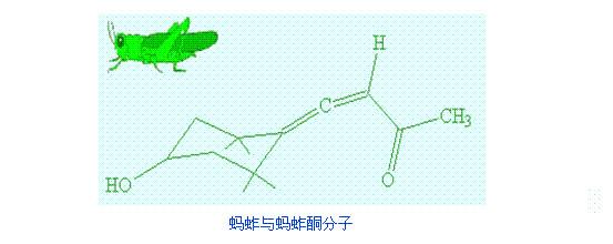 蝗虫结构图简笔画